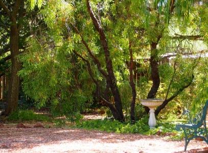 snotty gobble tree